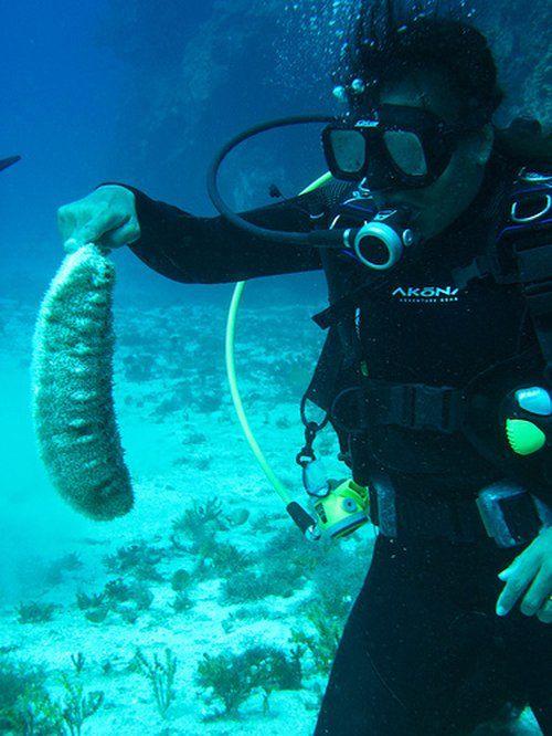 Внимание! Подводные монстры (30 фото)