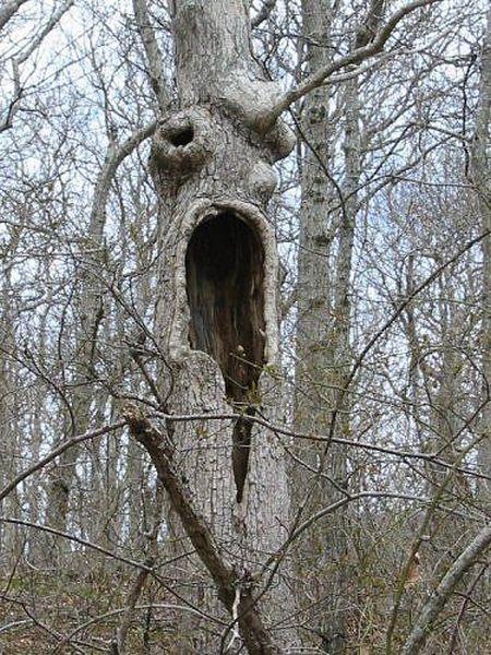 По-настоящему страшные деревья (18 штук)