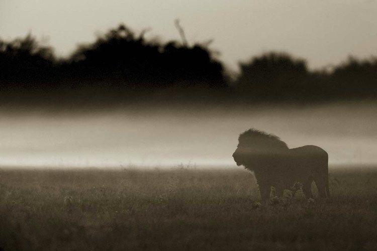 Фотографии животных (74 фото)