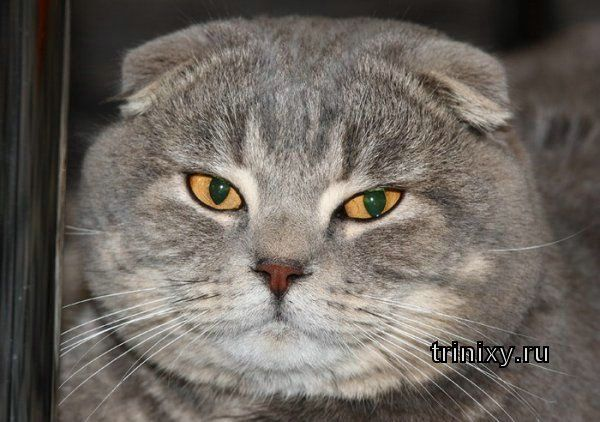 Кошачья мимика человеческим языком (20 фото)