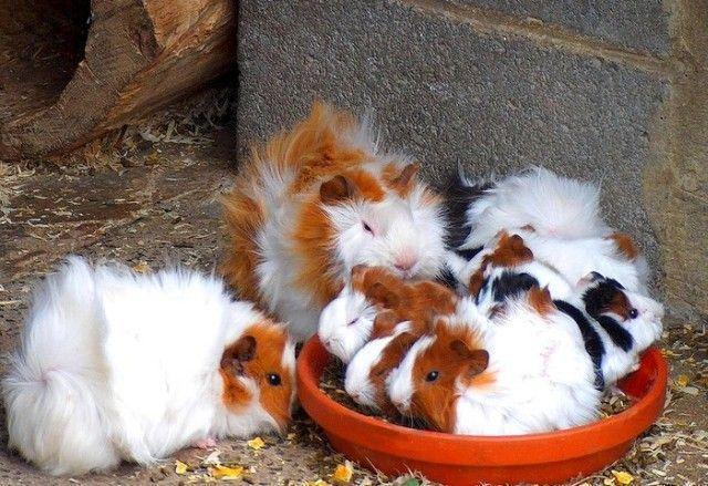 Позитив! Подборка забавных животных (71 фото)