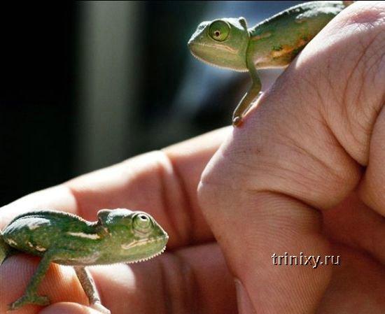 Позитив дня! Маленькие зверьки (76 фото)