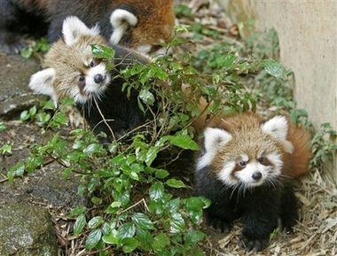 Детский зоопарк (66 фото)