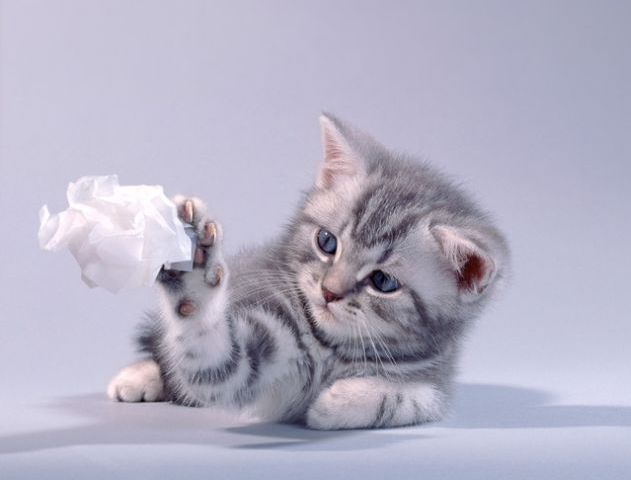 http://cdn.trinixy.ru/pics3/20080804/kitties_01.jpg