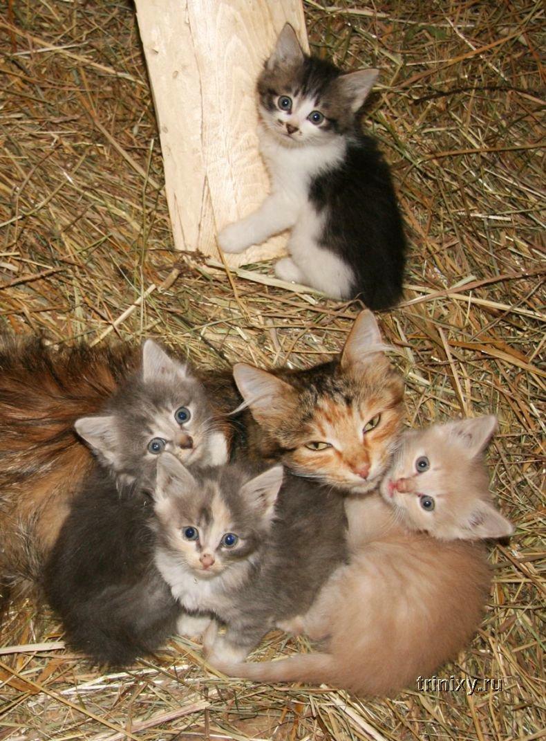Отличные котята (20 фото)