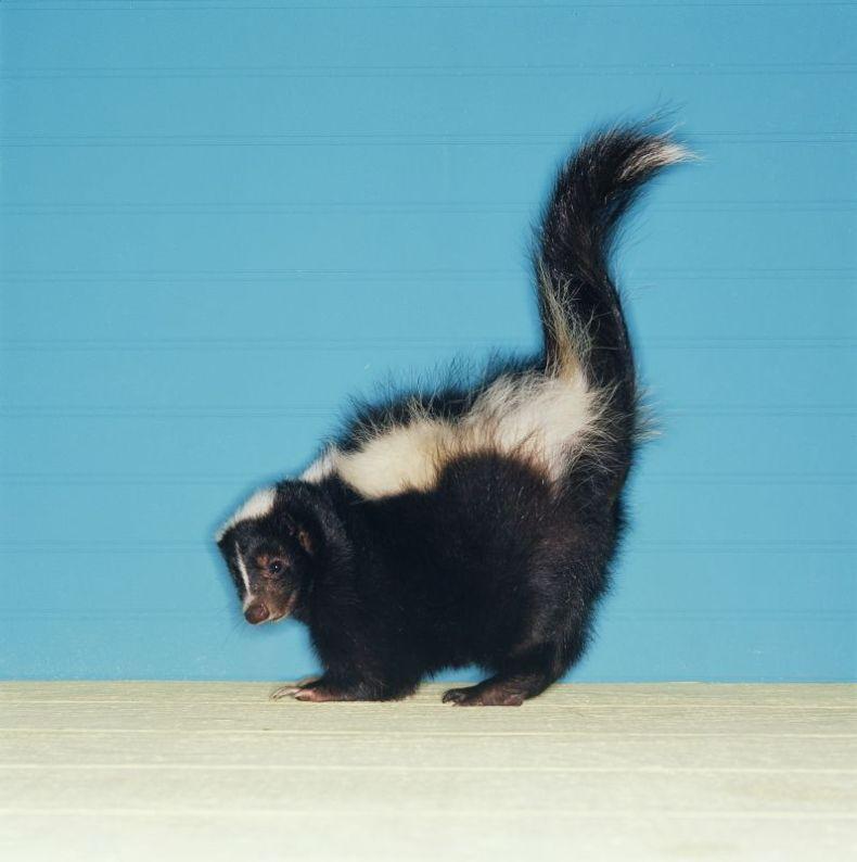 Красивая фотосессия с животными (50 фото)