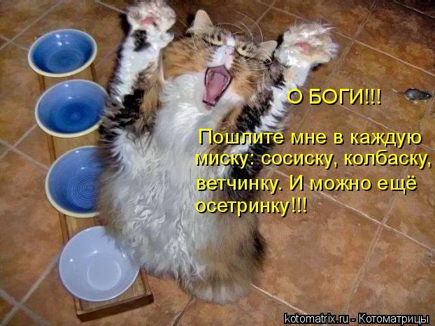 Лучшие котоматрицы недели (50 штук)