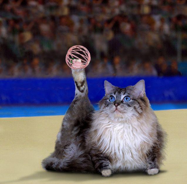 Спорт животных (50 фото)