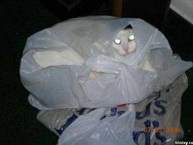 Коты-прожекторы и сумчатые коты (40 фото)