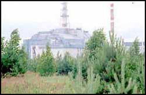 Чернобыльские грибы натолкнули ученых