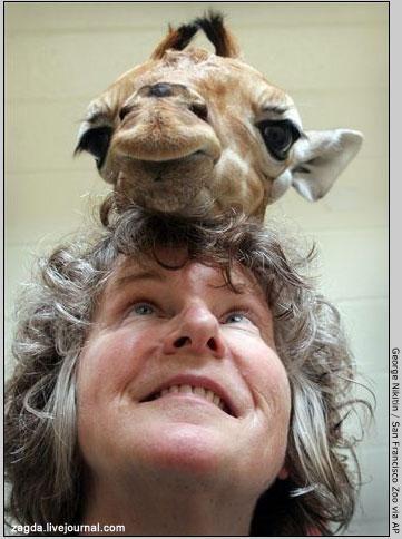 Позитивная подборка. Люди и животные (61 фото)