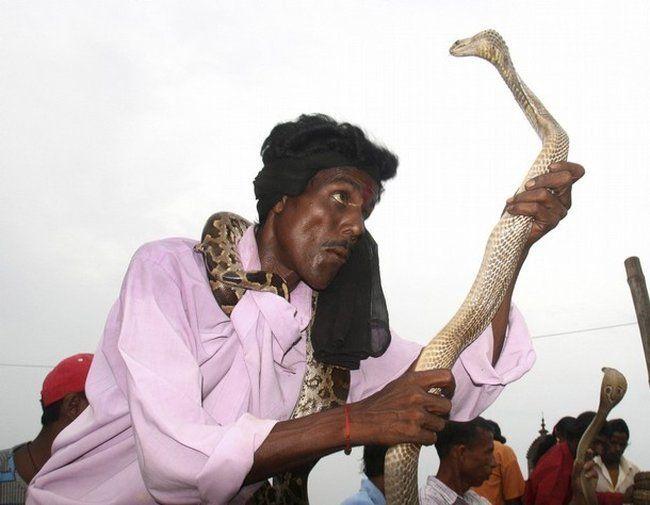 Заклинатели змей (44 фото)