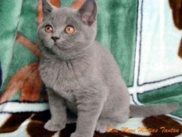 Уникальный котик (2 фото)