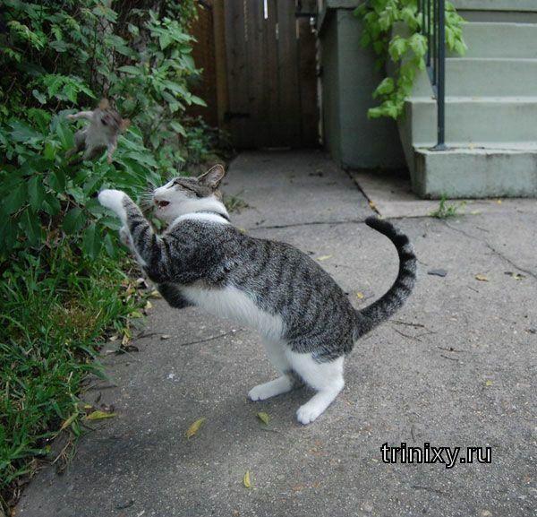 Кошки-мышки (4 фото)