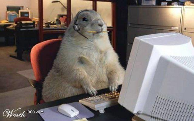 http://de.trinixy.ru/pics3/20080825/podb/3/animals_14.jpg