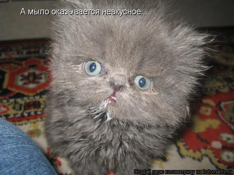 приколы в фотографиях. смешное. приколы. коты.  Метки. юмор. интересно.