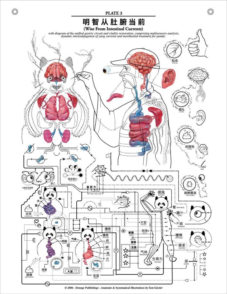 Уроки анатомии от аллы 3 фотография