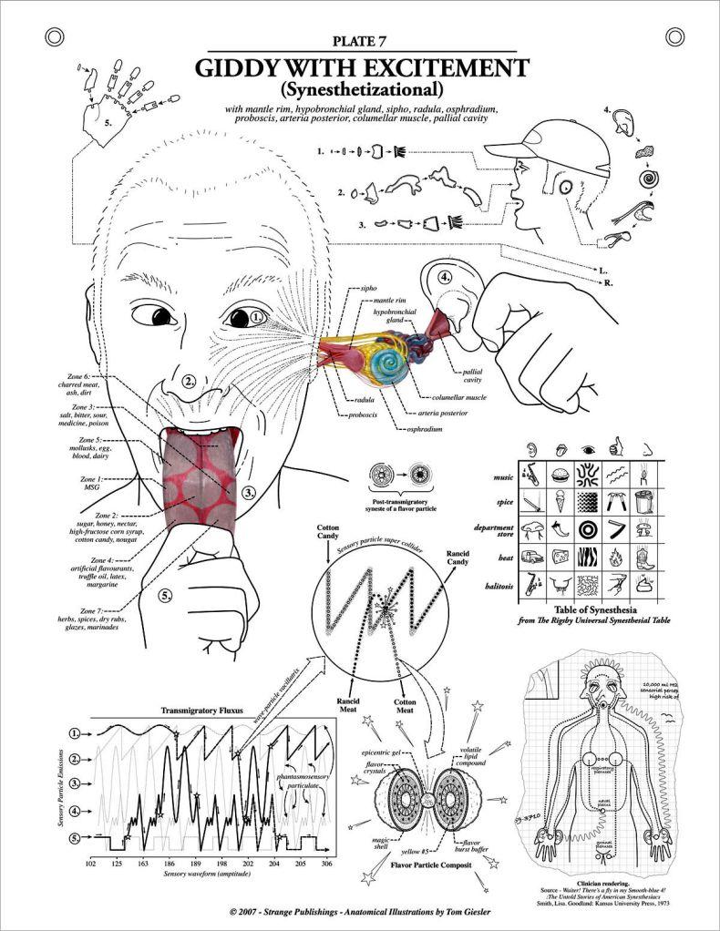Уроки анатомии от аллы 19 фотография