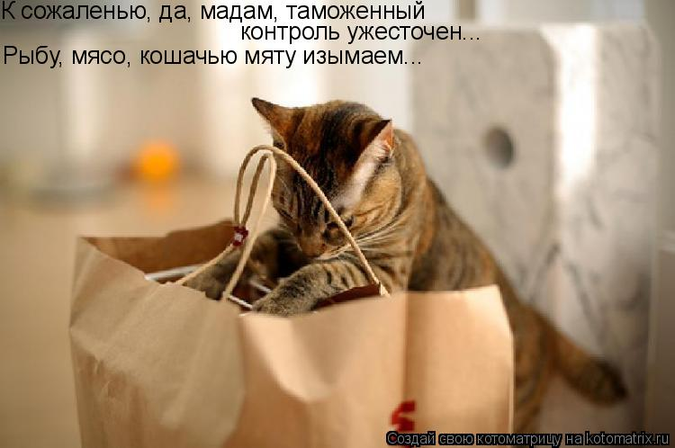 http://cdn.trinixy.ru/pics3/20080903/kotomatrix.jpg