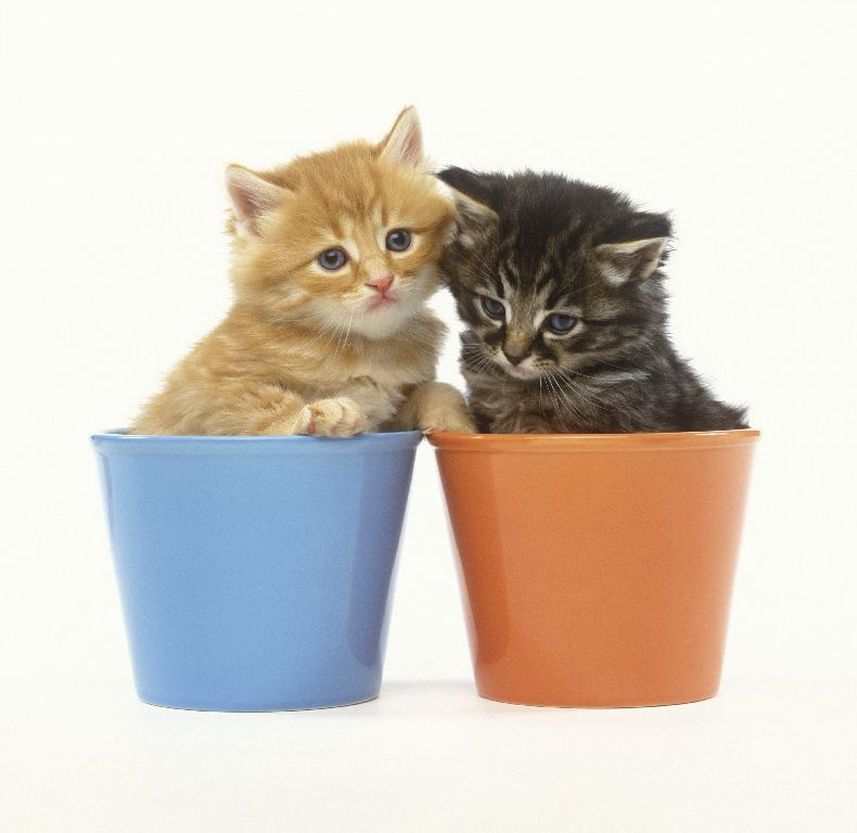 Отличная подборка котов (130 фото)