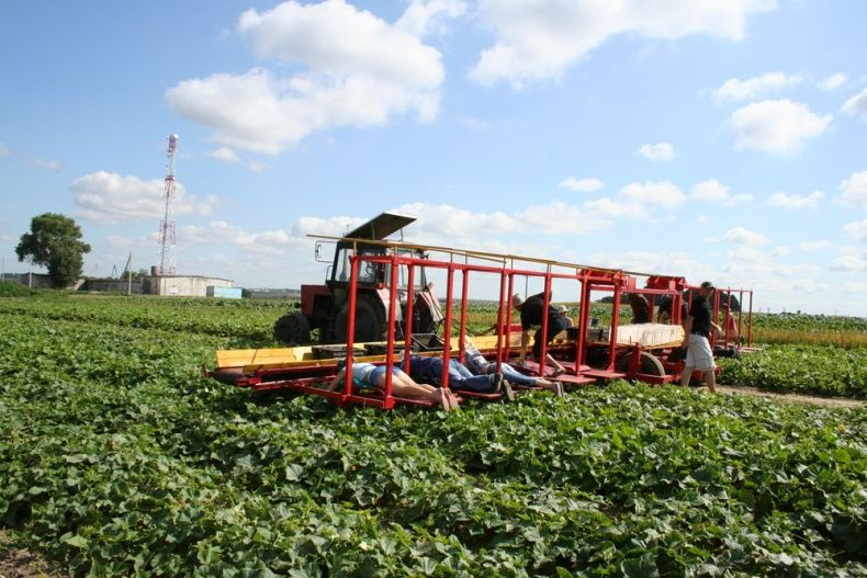 Комбайн по сбору огурцов (15 фото)