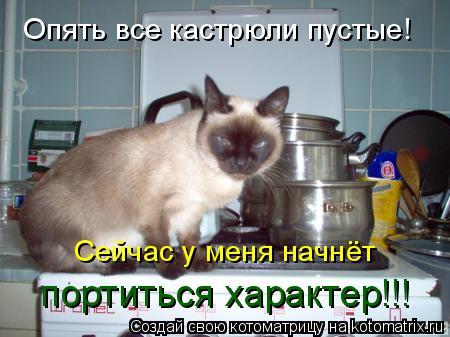 100 лучших котоматриц за последние две недели (100 фото)
