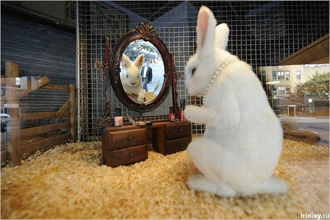 Banksy's Pet Store (31 фото)