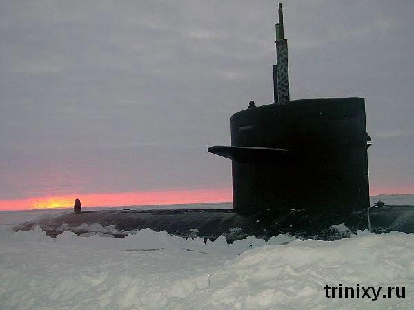 Новые друзья подводников )) (8 фото)