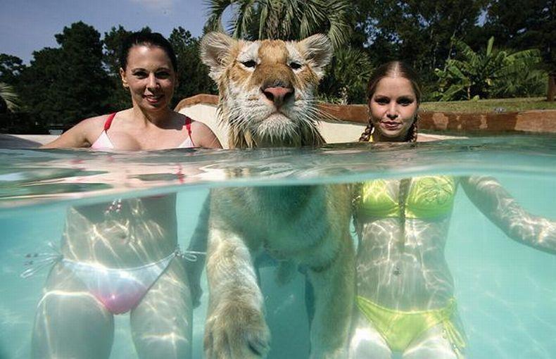 Девушки-дрессировщицы плавают с тиграми (10 фото)