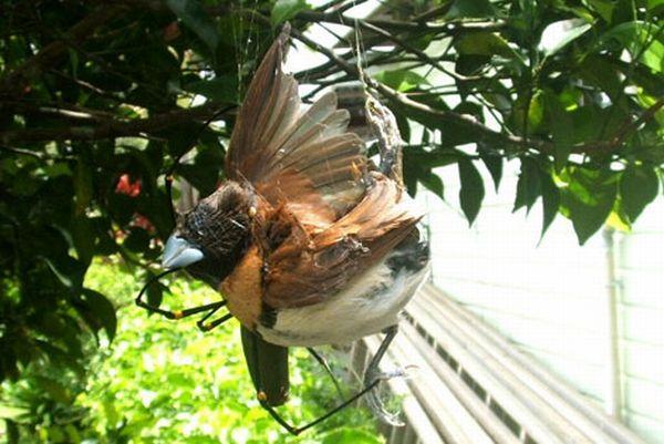 Птичку жалко ;( (4 фото)