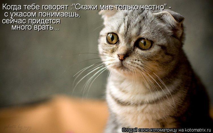 kotomatrix_39.jpg