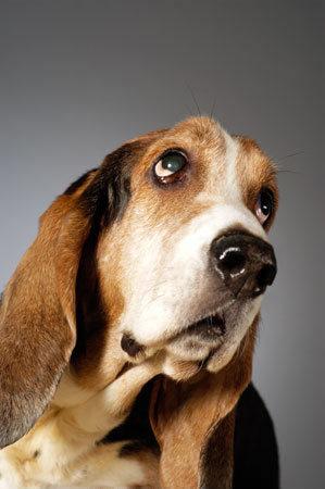 Новые породы немецких собак (17 фото)