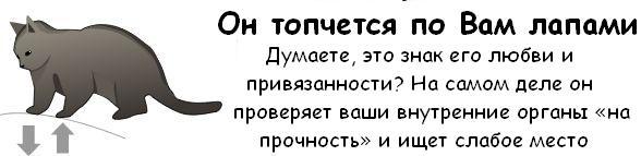 http://trinixy.ru/pics3/20081114/cat_02.jpg