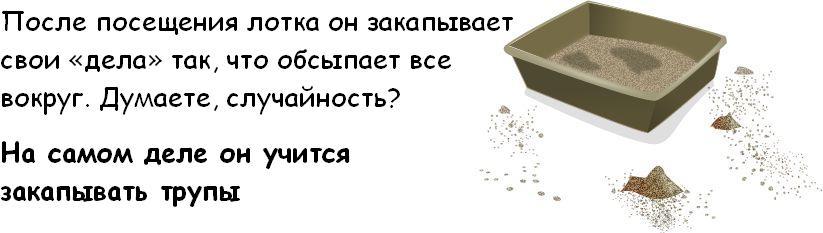 http://trinixy.ru/pics3/20081114/cat_03.jpg