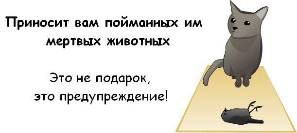 http://trinixy.ru/pics3/20081114/cat_05.jpg