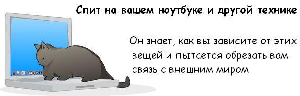 http://trinixy.ru/pics3/20081114/cat_08.jpg