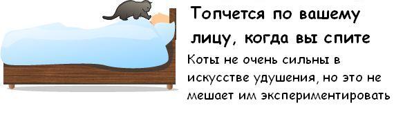 http://trinixy.ru/pics3/20081114/cat_09.jpg