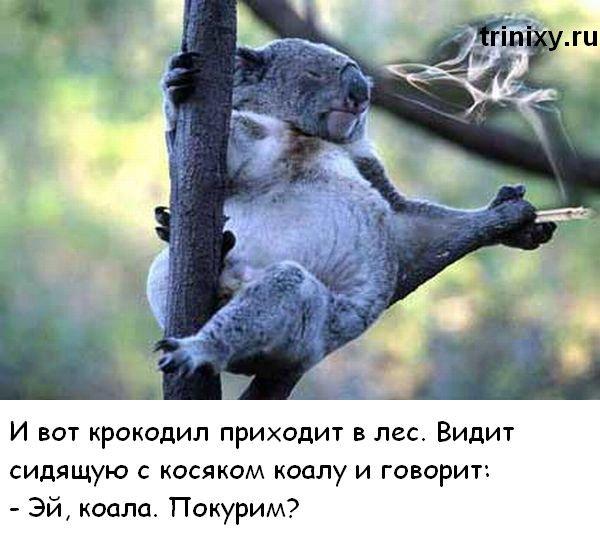 Как коала и ящерица косяк курили (7 картинок)