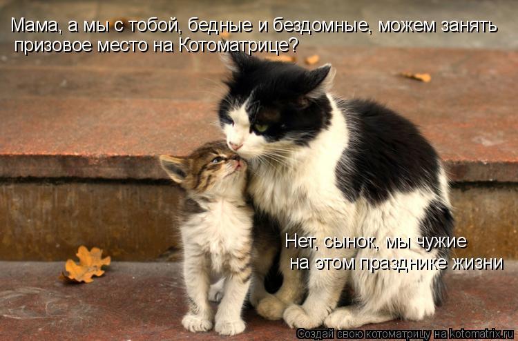 http://cdn.trinixy.ru/pics3/20081120/kotomatrix_02.jpg