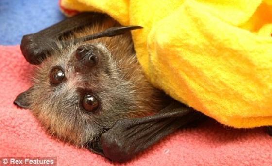 http://trinixy.ru/pics3/20081203/podb/9/bats_01.jpg
