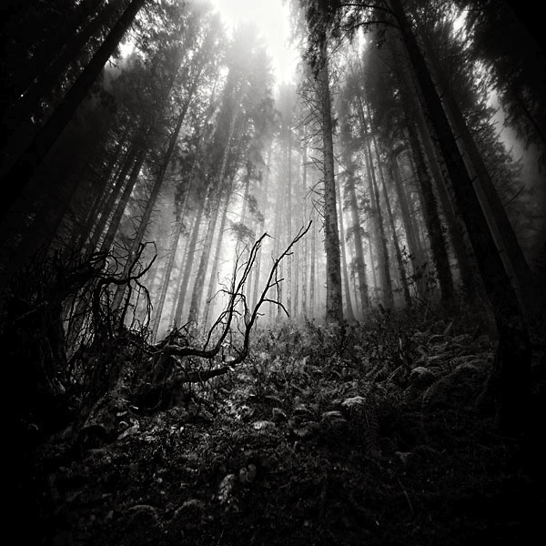 природа черно-белые фото