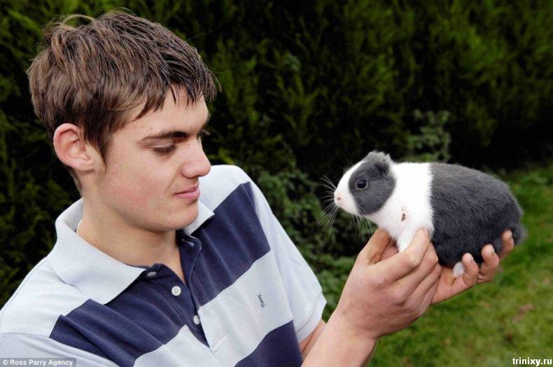 Кролик Винсент (3 фото)