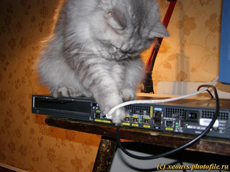 Наша киска любит Cisco (12 фото)