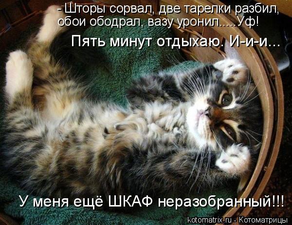 Забавные переговоры котов и... Классные фотографии котов (27 фото).