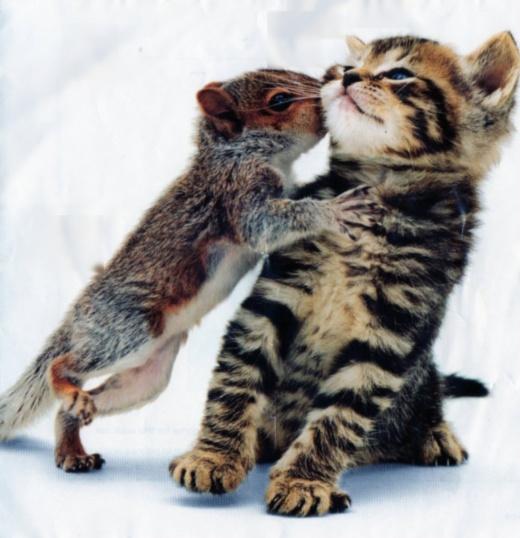 Котенок и белка (4 Фото)