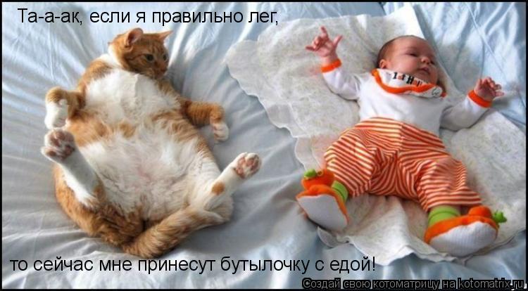 http://de.trinixy.ru/pics4/20090129/kotomatrix_02.jpg