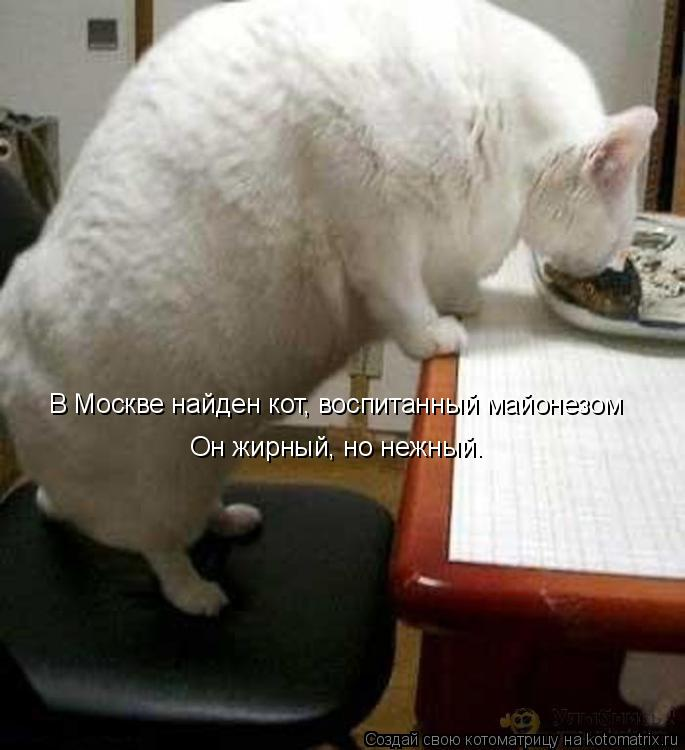 http://de.trinixy.ru/pics4/20090129/kotomatrix_42.jpg