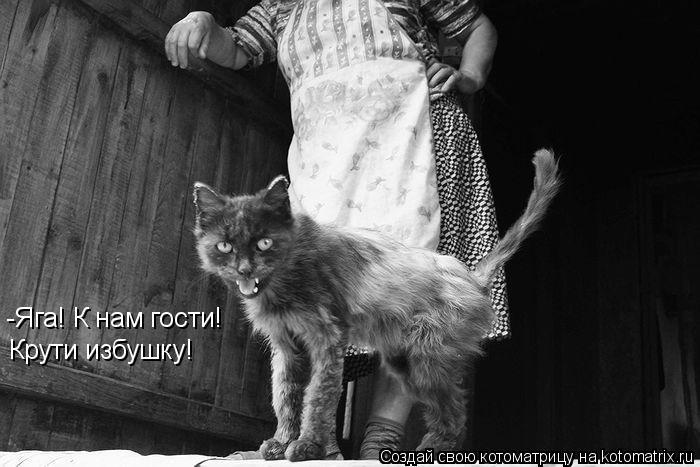 100 лучших котоматриц (100 фото)