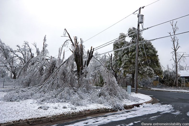 экзема фото обледенелые машины деревья после шторма консервов, можно