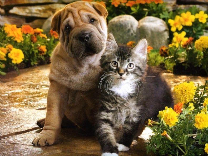 Кот и пес (7 Фото)